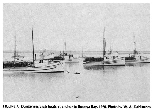 Bodega bay the north coast curmudgeon page 2 for Bodega bay fishing reports